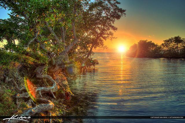 magrove sunset